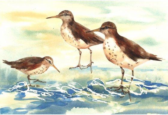 Sandpiper Shore - framed original watercolour