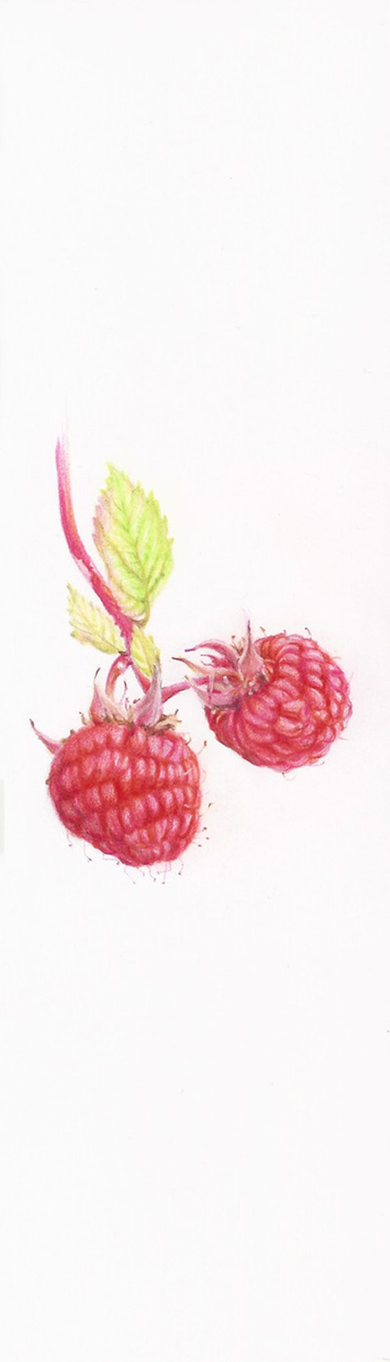 My Wild Berries as Bookmarks - The Raspberry