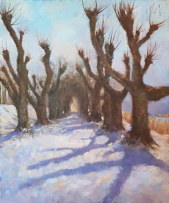 Linden Alley. Winter