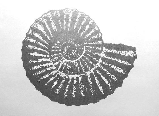 Ammonite single colour (silver on white)