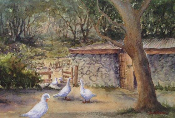 Geese on Dartmoor