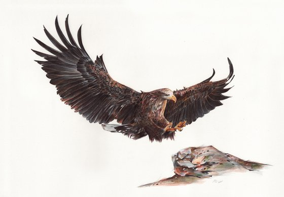 White-tailed Eagle (Ballpoint Pen Drawing)