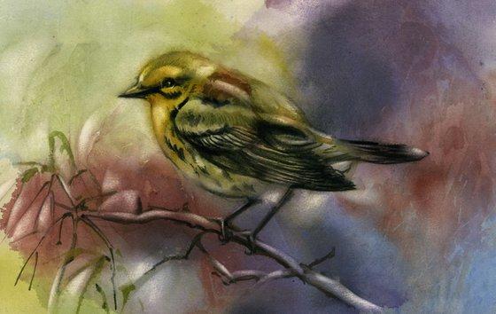 pine warbler watercolor