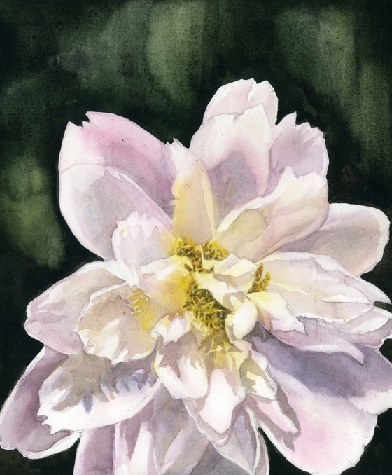 soft in pink watercolor floral