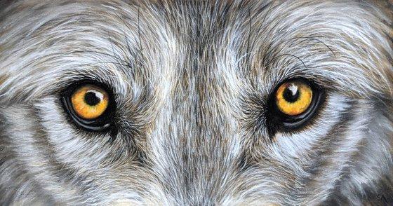 WOLFS STARE (Original Painting)