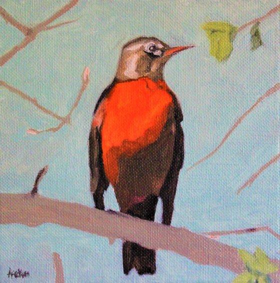 Song birds - Robin