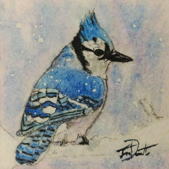 BlueJay BirdBox