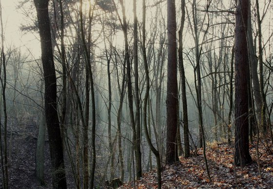 Photography | Fog in forest
