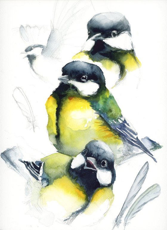 Great tit watercolor studium, wildlife, birds
