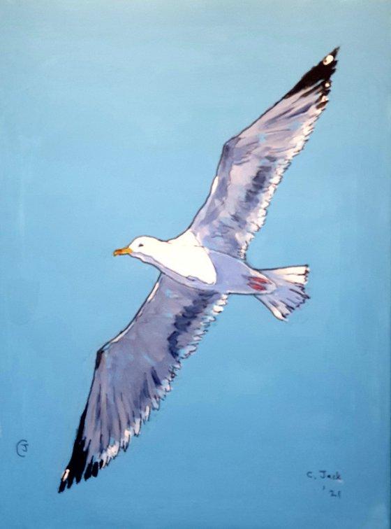 Seagull #11