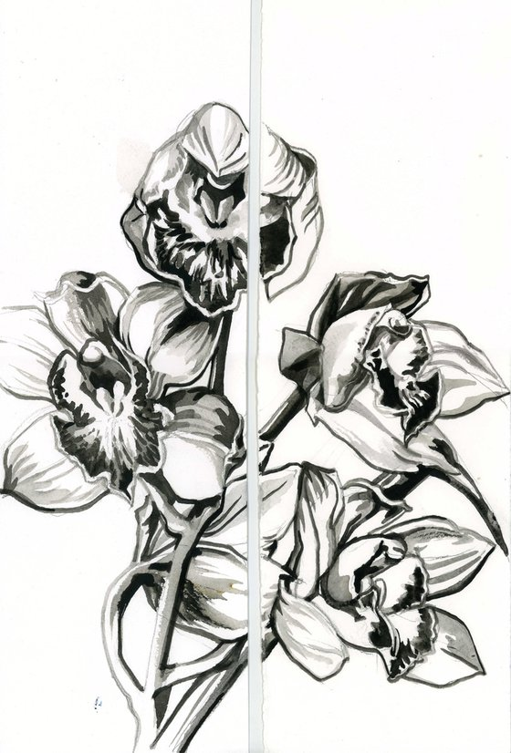 orchid brush drawing diptych