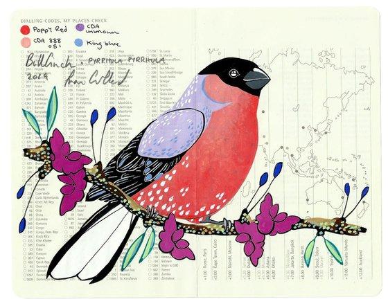 Birds of Europe: Bullfinch