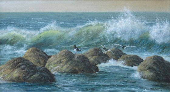 Waves & Oystercatchers