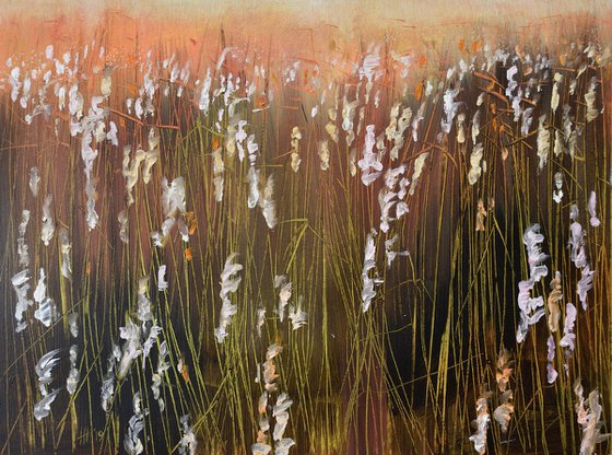 Reed Plumes in the evening sun