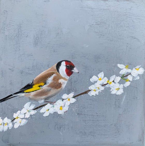 Goldfinch On Cherry Blossom