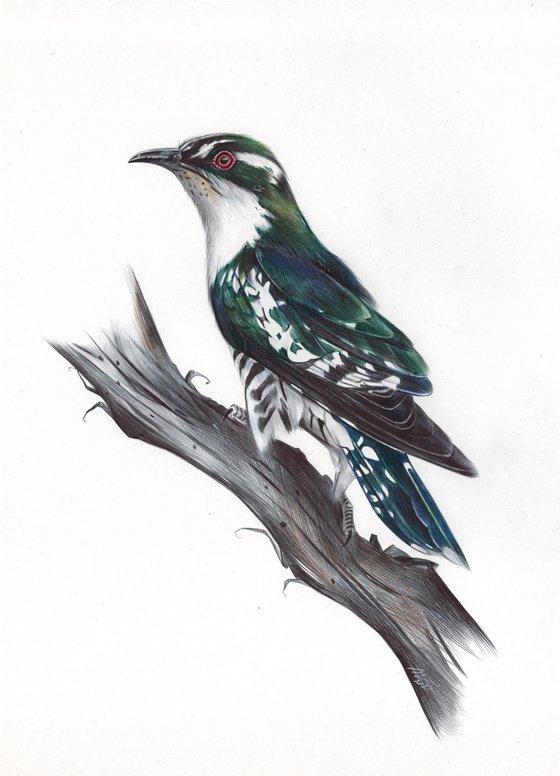 Diederik Cuckoo (Ballpoint pen drawing)