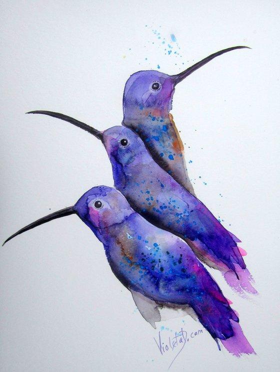 Hummingbirds 17