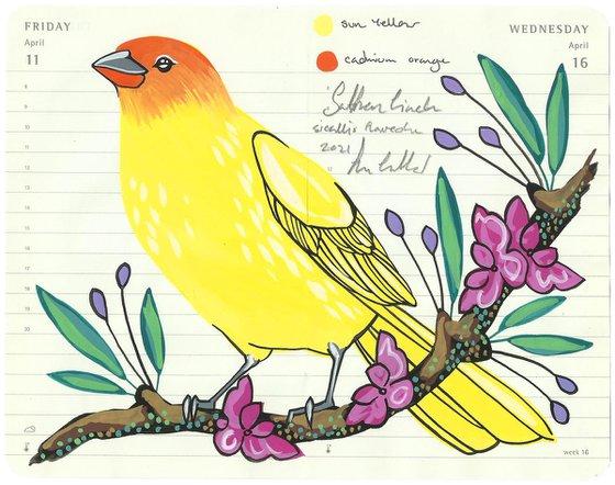 Birds of South America: Saffron Finch