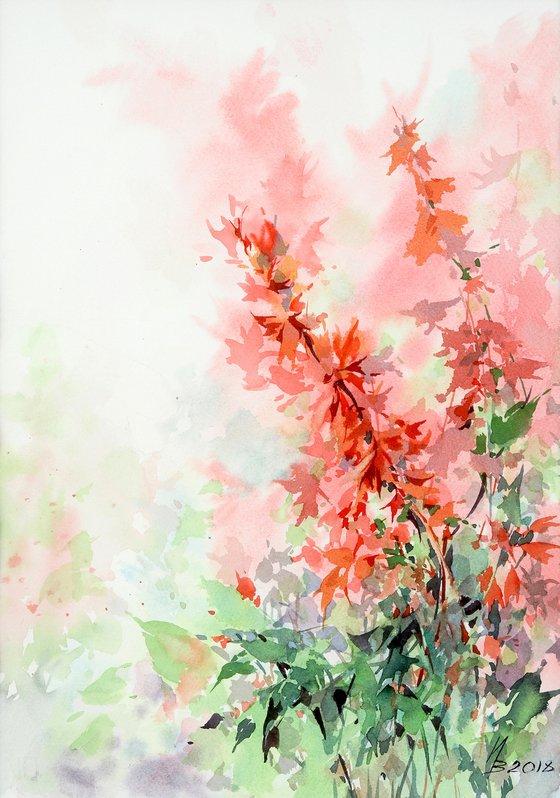 Salvia, September Fire