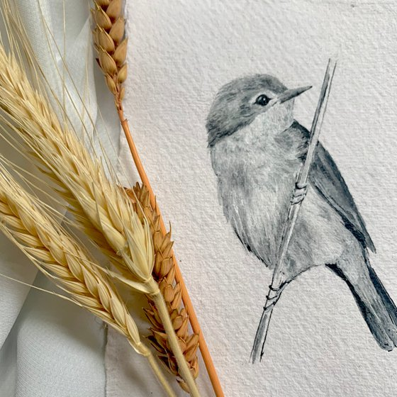 Small Reed Warbler Portrait (A6)