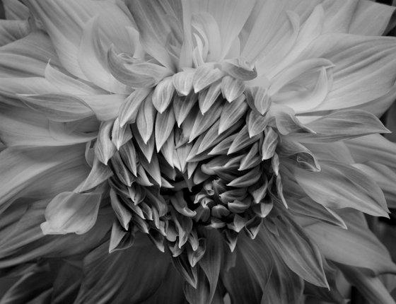 Floral Ecstasy #1