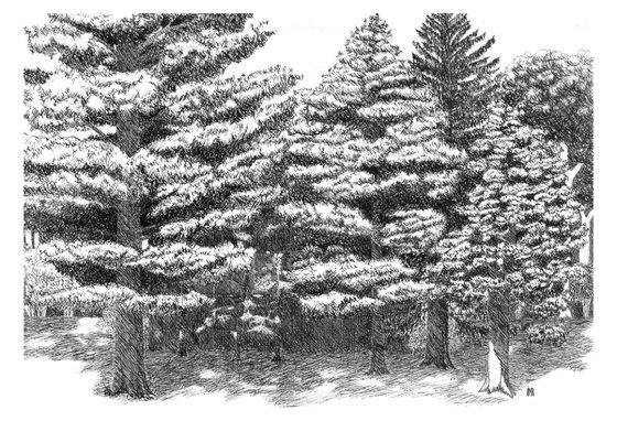 Pine Grove Hideaway