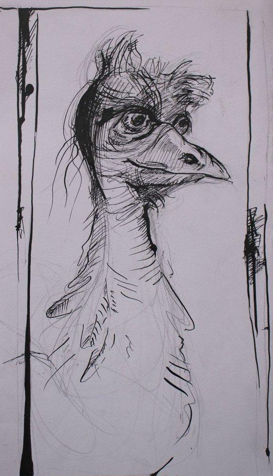 """""""Emu"""""""