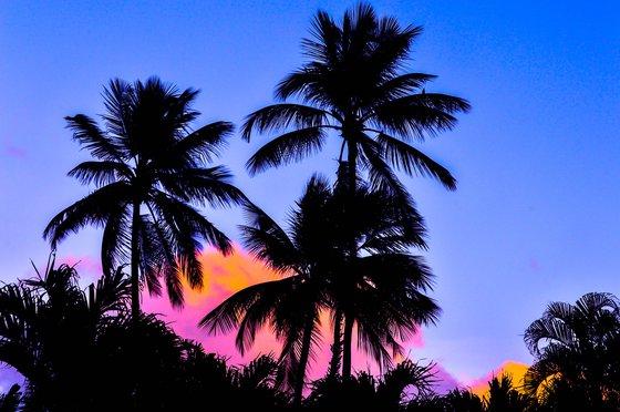 Tropical Palms, Barbados