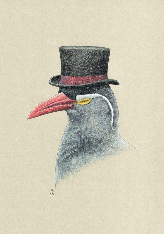 "Original pastel drawing bird ""Inca tern"""