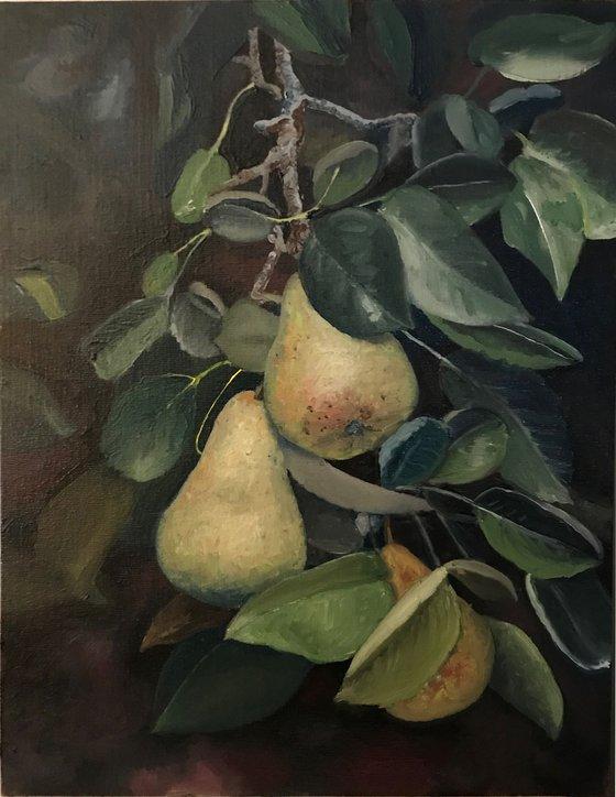 Pears On Tree