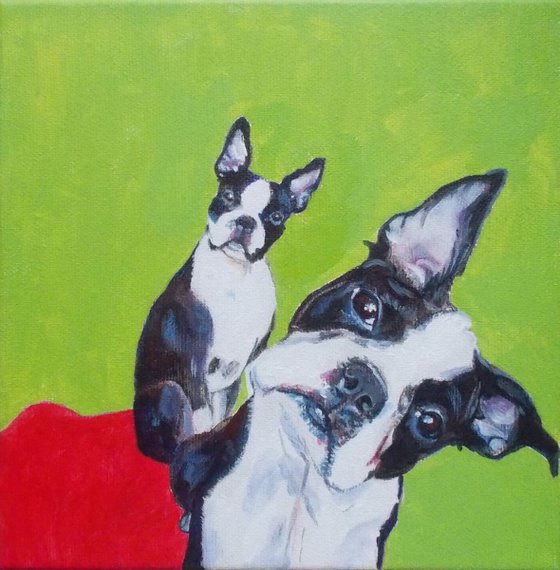 Boston Terriers ♥♥♥I want one (or two!?) ......