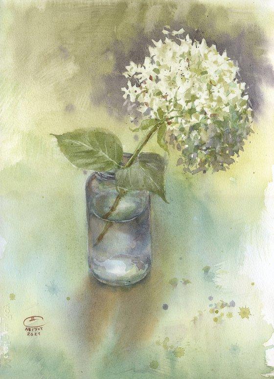 Hydrangea. Still life.