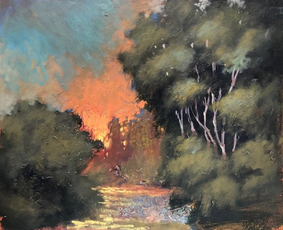Sunset in the Glade