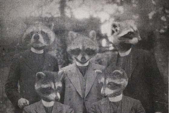 Racoons I