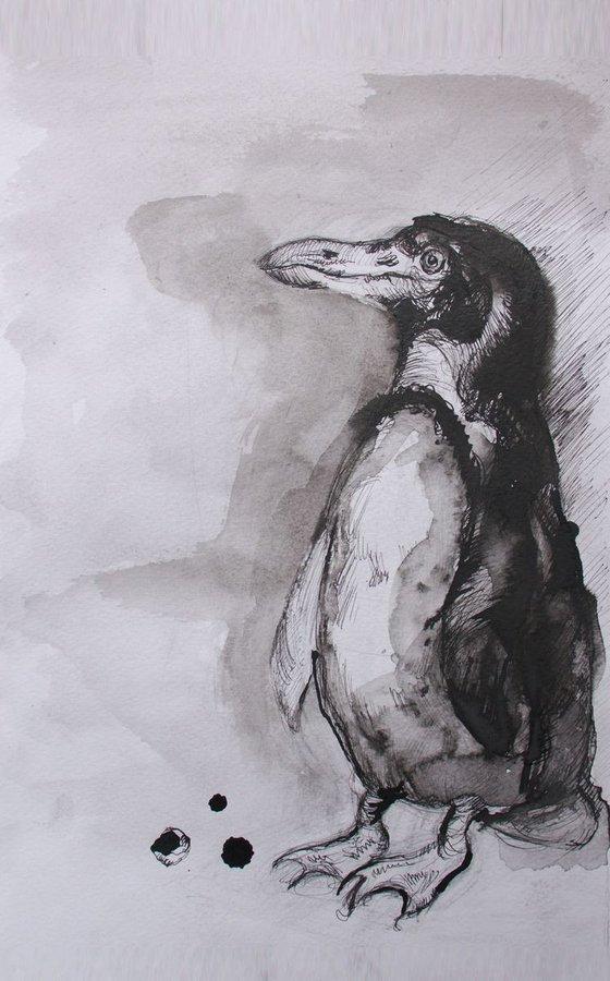 """African Penguin"""