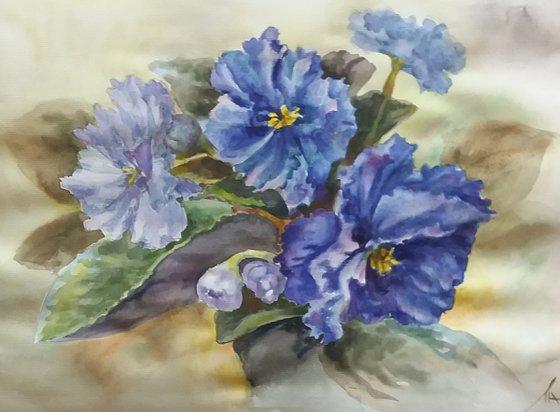 Violets indoor