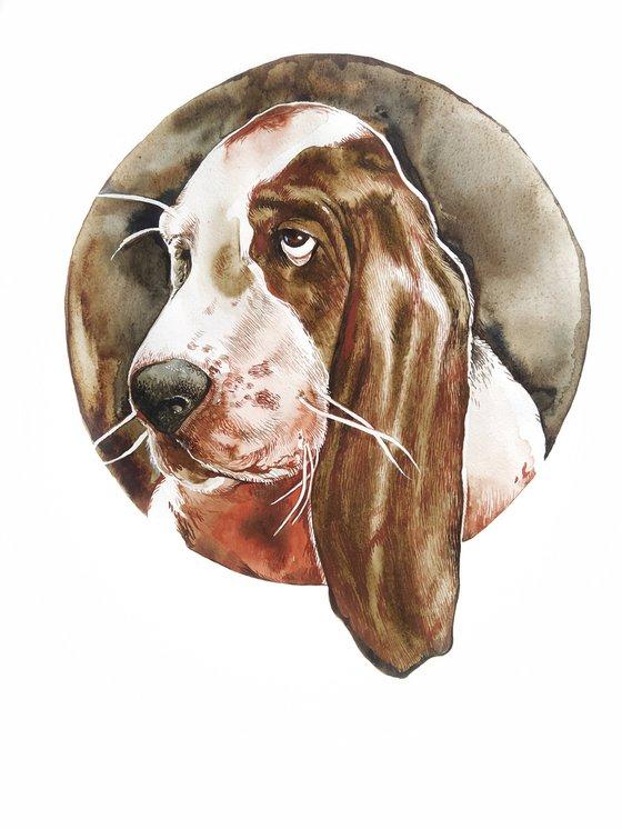 Basset hound 5