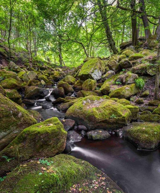 Woodland Stream  - Limited Edition Print