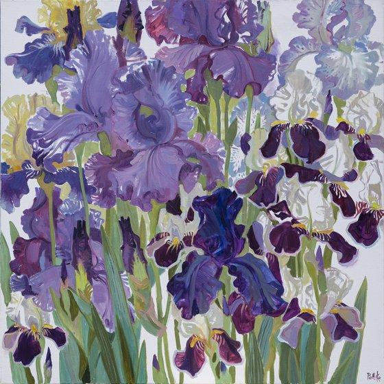 Irises. Blue.