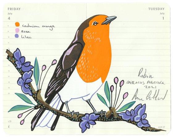 Birds of Europe: Robin