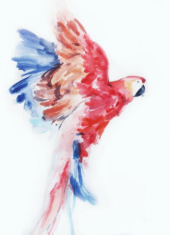 Bird Red parrot