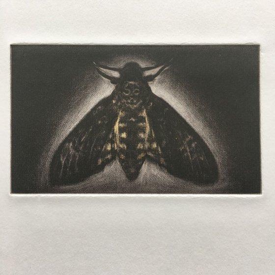 Death Head Hawk Moth