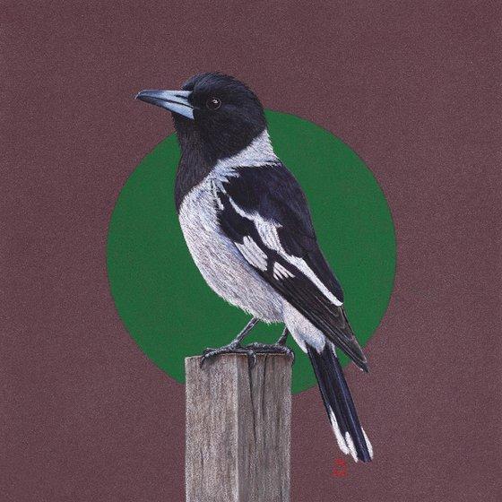 "Original pastel drawing bird ""Pied butcherbird"""