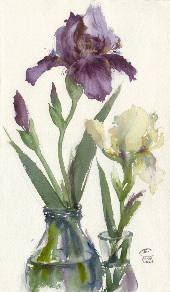 Purple and cream irises. Tender flowers
