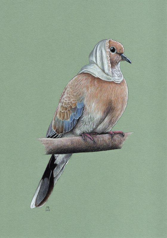"""Original pastel drawing bird """"Laughing dove"""""""