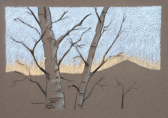 Winter Birches - Bare trees against a fading blue and orange sky