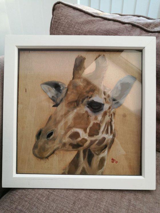 'Giraffe'