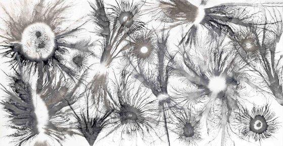 Exploflora Series No. 30