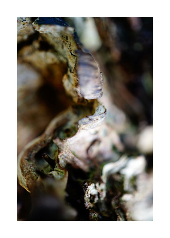 Macro Abstract Nature Photography 240 (LIMITED EDITION OF 15)