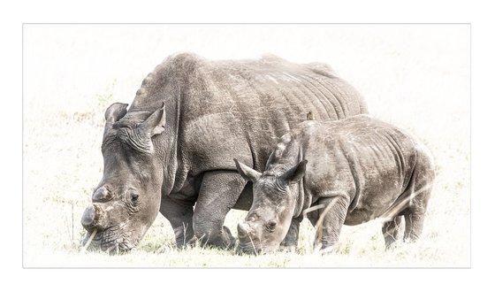 Future Rhino